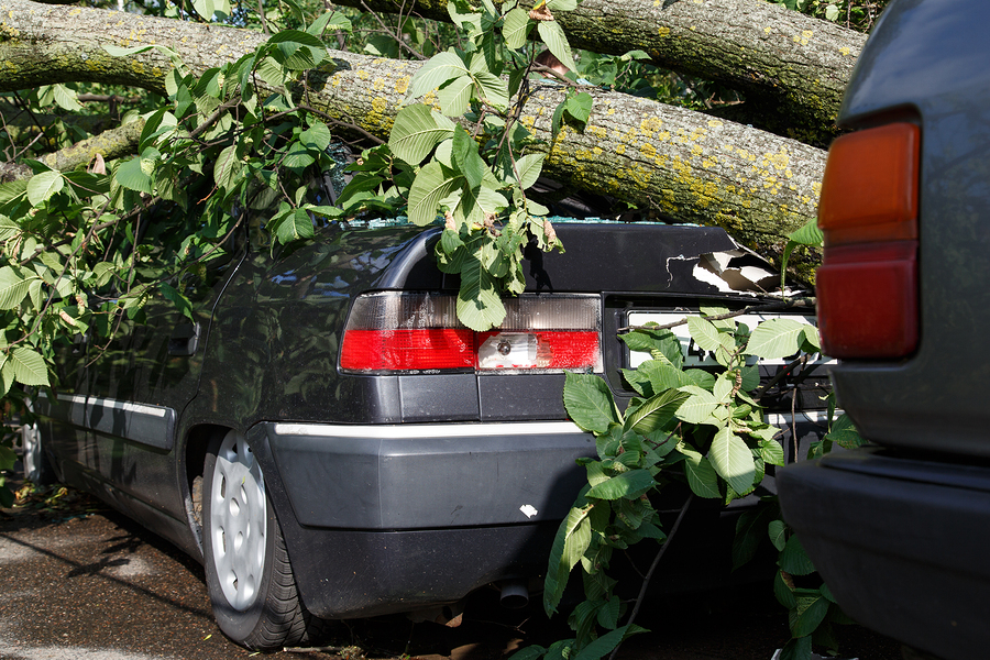 Emergency Tree Care in Ann Arbor & Chelsea, MI