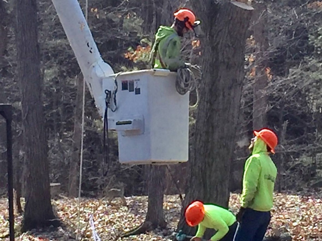 Schedule Tree Removal Services in Ann Arbor & Chelsea, MI